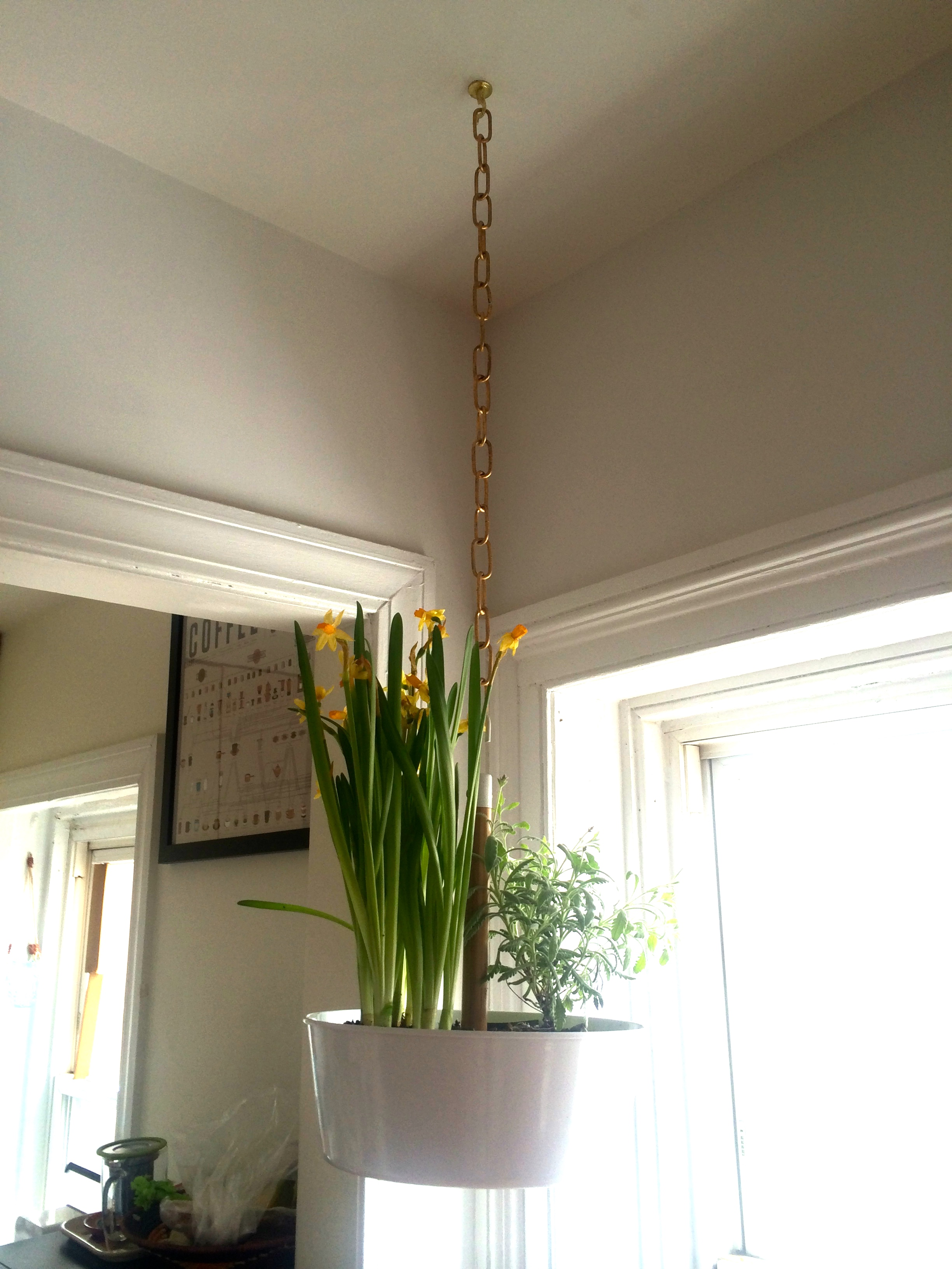 Wall Planters Ikea How To Hang A Planter Ala The Ceiling Without Task Rabbit A Man
