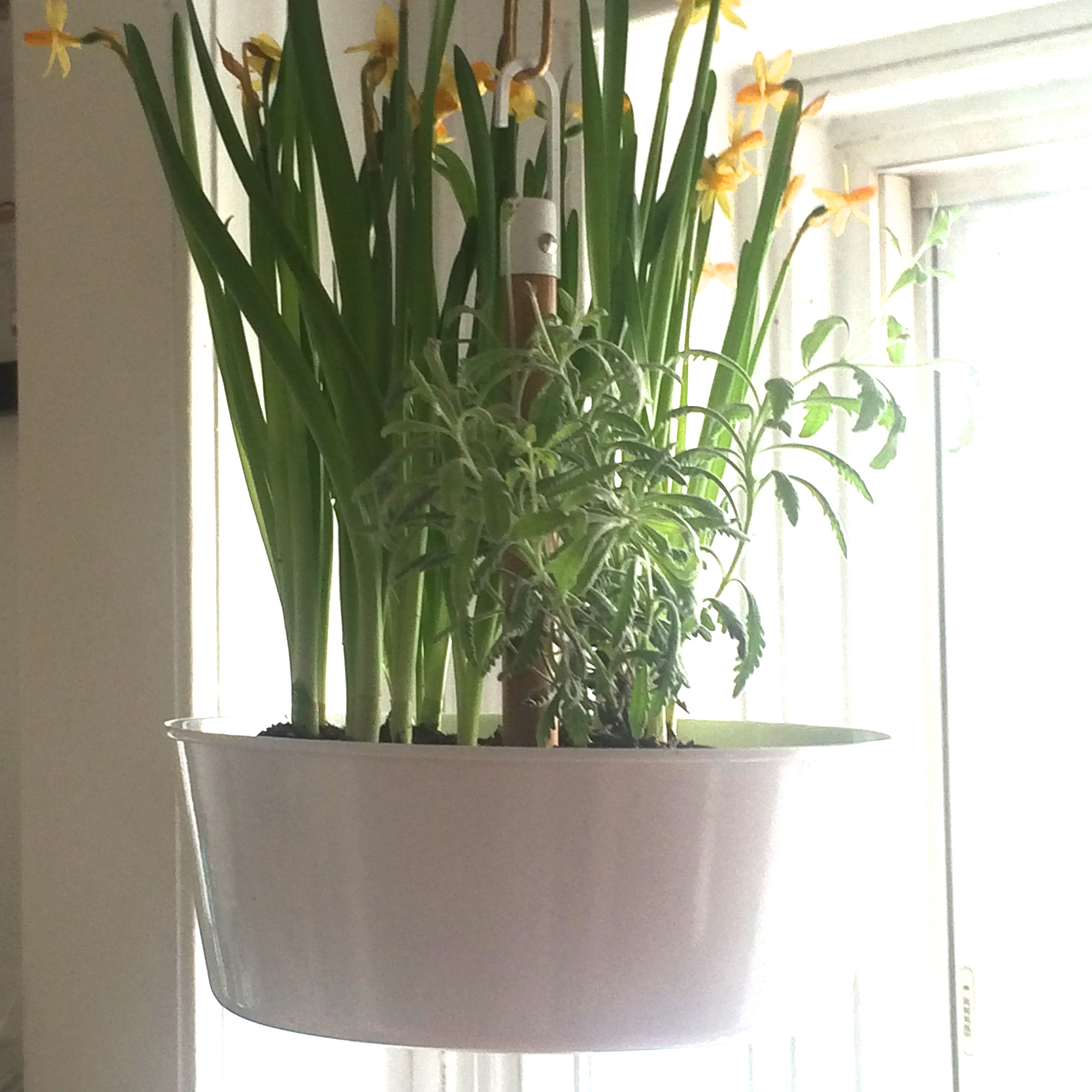 How to hang a planter ala the ceiling (without Task Rabbit, a man ...